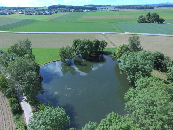 Kleiner See an der L283 zwischen Reichenbach und Bad Schussenried