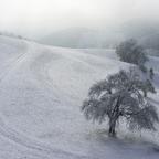 Schneestimmung